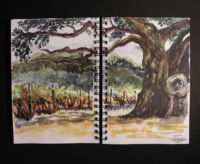 Sketchbook page, Pickberry Vineyard